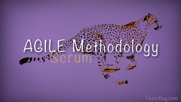 Agile Methodology- Scrum
